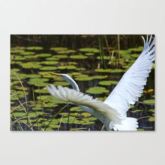 Egret Take Off Canvas Print