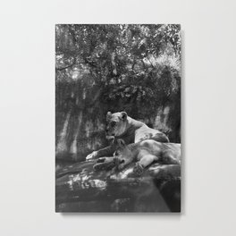 Portland Lioness B&W Metal Print