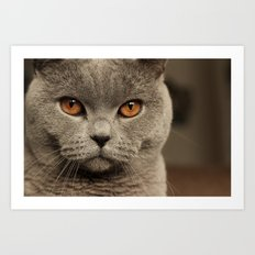 Diesel, the cat - (close up)  Art Print
