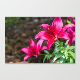 Hot Pink Flowers Canvas Print