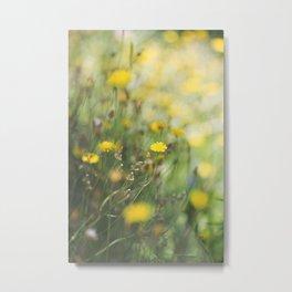 Dandelion flowers Metal Print