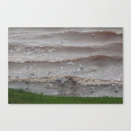 Evening Seaguls Canvas Print
