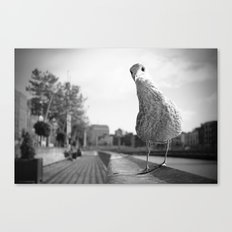 Inquisitive seagull Canvas Print