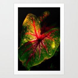 Caladium leaf Art Print