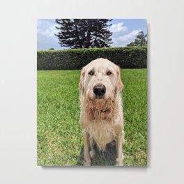 Dog Daze Metal Print