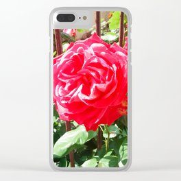 rose red,whit bee Clear iPhone Case