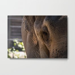 Elephant Eye Close-Up Metal Print