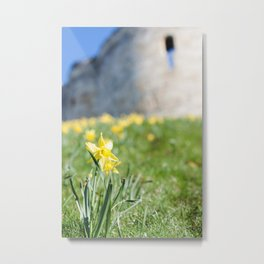 Cliffords Tower Daffodils Metal Print