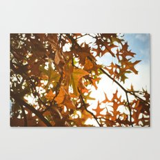 sun through autumn leaves Canvas Print