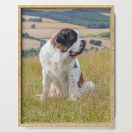 St Bernard with a view Serving Tray