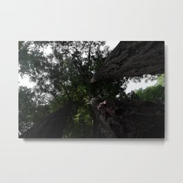 Looking up at the Redwoods Metal Print