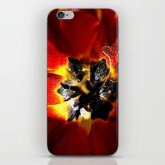 Red Tulip iPhone & iPod Skin