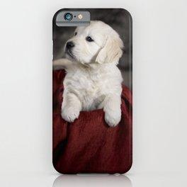 Labrador puppy iPhone Case
