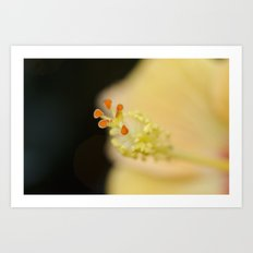 Hibiscus Up Close Art Print