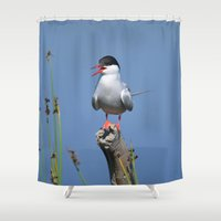 arctic monkeys Shower Curtains featuring Arctic Tern by Alaskan Momma Bear