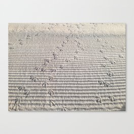 sand, bird's footprints in the sand, the beach Canvas Print