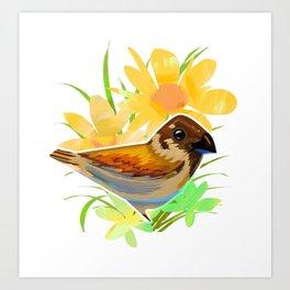 Daisy sparrow Art Print