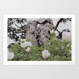 Chinese Heritage Garden Art Print