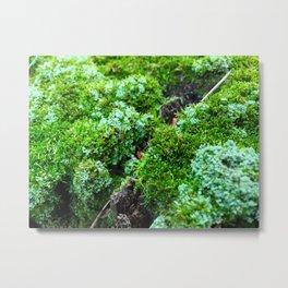 Tree Stump Moss Metal Print