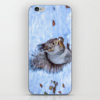 squirrel iPhone & iPod Skins featuring Squirrel  by Svetlana Korneliuk