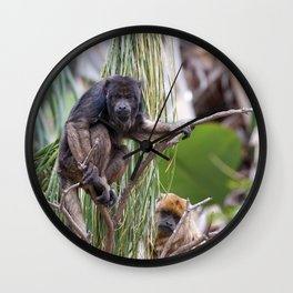 Pair of Howler Monkeys watching Wall Clock