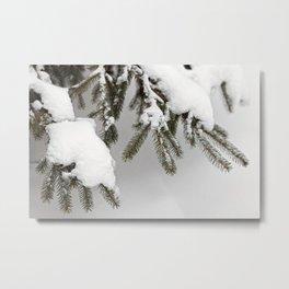 Snowy Spruce Needles 12 Metal Print