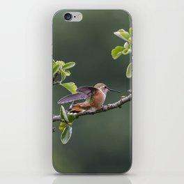 Rufous Hummingbird at Large, No. 2 iPhone Skin