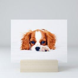 Cavalier King Charles Mini Art Print