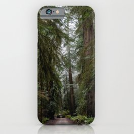 Redwood Forest Adventure III - Nature Photography iPhone Case