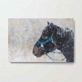 Winter Horse II Metal Print