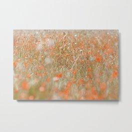 Field of orange flowers Metal Print