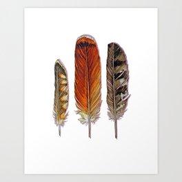 Raptor Feathers Art Print