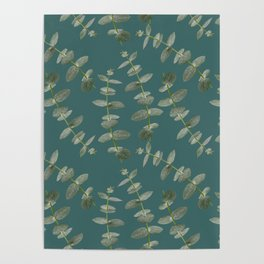Eucalyptus Patterns with Aqua Background Realistic Botanic Patterns Organic Design with Real Plants Poster