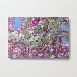Colourful Blossoms Metal Print