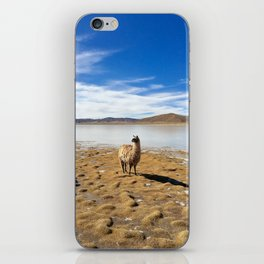 No Drama Llama iPhone Skin