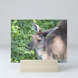 Kangaroo Mini Art Print