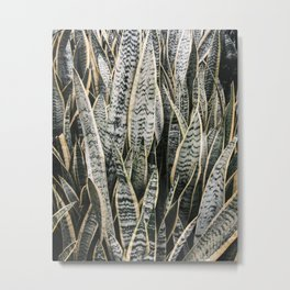 Plant Photography Tropical Exotic Plants Snake Tongue Beauty Wild Nature Metal Print