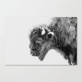 Animal Photography | Bison Portrait | Black and White | Minimalism Canvas Print