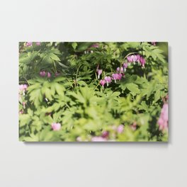 Pink Bleeding Heart Flowers Metal Print