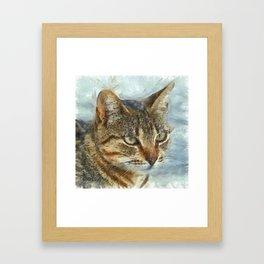 Stunning Tabby Cat Close Up Portrait Framed Art Print