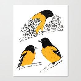 Oriole Bird Canvas Print