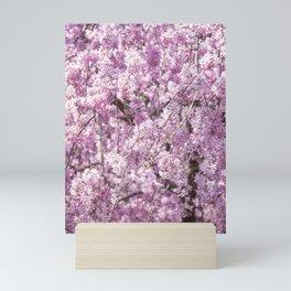 Cherry Blossom Spring Mini Art Print