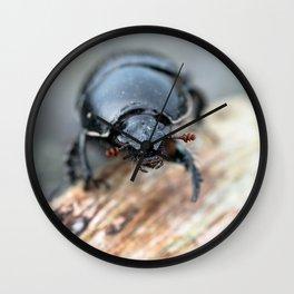 Close-up of a Dor / Dumbledore Dung Beetle Wall Clock