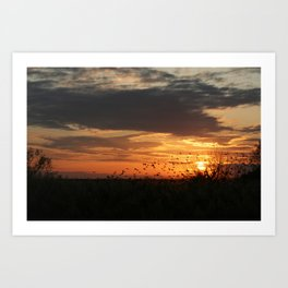 sunset and birds Art Print
