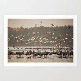 Common Cranes at sunrise Art Print