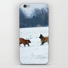 Lets play - Dogs in the snow iPhone & iPod Skin