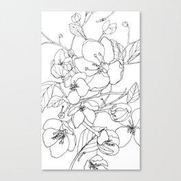 Crabapple Blossoming Canvas Print