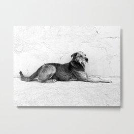 xela dog Metal Print