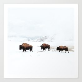 Frosty Bison Family on a Snowy Winter Day Art Print
