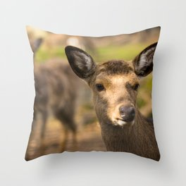 Deer cow looks around the corner Throw Pillow